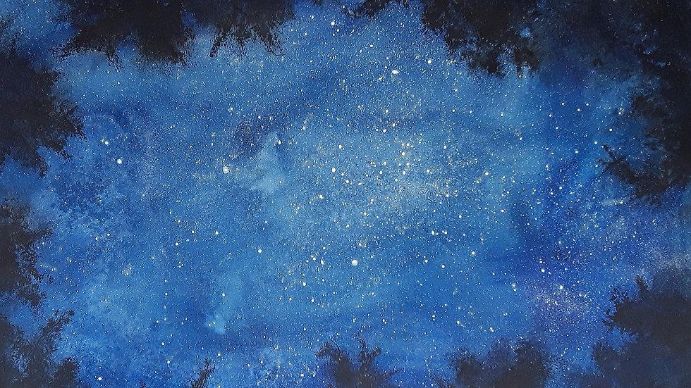 Canopy starry night