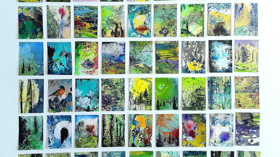 54 series - Wilderness iridescence