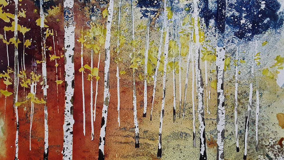 Autumn birch trees path