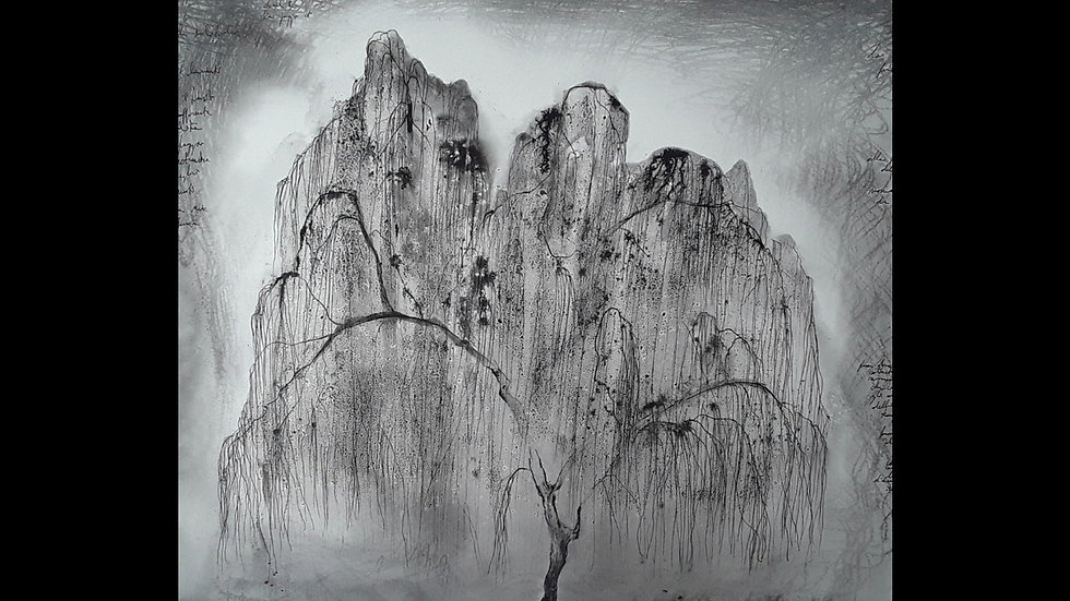 Weeping willow Winter reverie