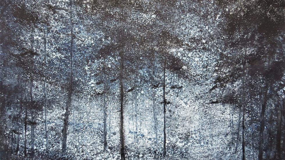 Indigo forest dusk