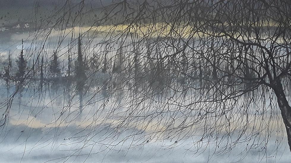Willow twilight shore
