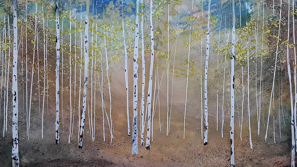 Glimpse of autumn sky birch trees