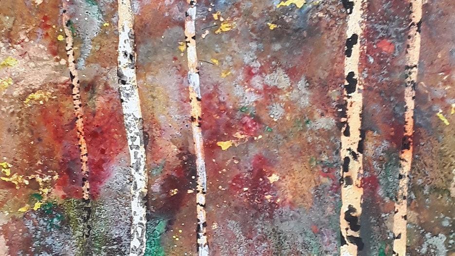 Autum birch trees