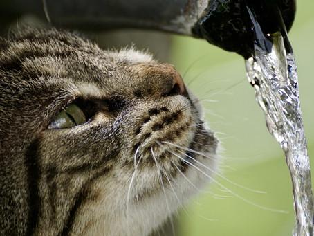 Une eau pleine de vie