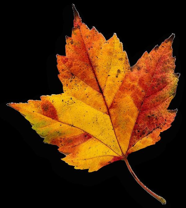 leaf-cut-out.png