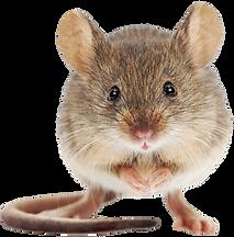 Rattie.png