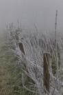 Dans Le Brouillard Et Le Givre 280A8579