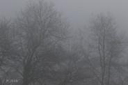 Arbres Dans Le Brouillard 280A8604