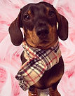 Burberry Dog Scarf, Brown Check Dog Scarf, Dog Scarves, Dog Neckerchief, Dog Clothing, Dogs Birthday Gifts, Handmade UK Dog Clothing