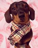 Fleece Scarves for all Dog Breeds