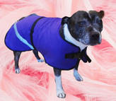 Staffy wearing their lovely handmade to Measure Dog Coat