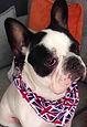 Union Jack Dog Bandanas, Dog Clothing, Dog Coats, Handamde UK, Clothing,