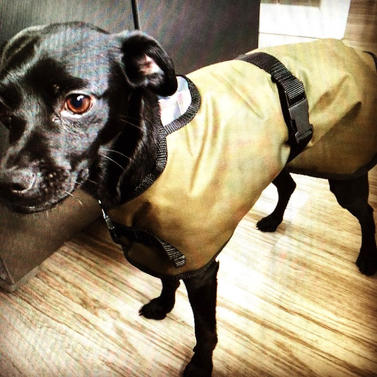 Waterproof Dog Coat in this attractive Country Classic Style