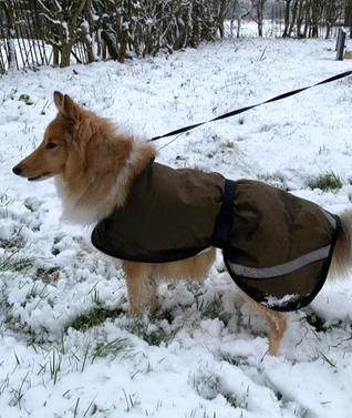 Waterproof Dog Coats UK, Bespoke Made to Measure Dog Coats in The Country Classic Design, perfect for the snow and Winter Weather