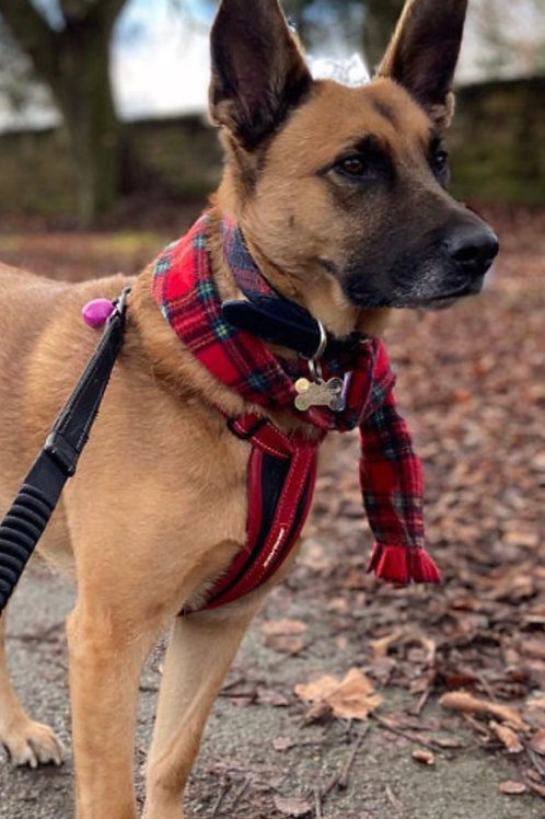 Red Tartan fleece Scarf, Handmade Fleece Scarf, Scottish, Scotland, Royal Stuart Fleece Dog Scarf, Dog Breeds, UK
