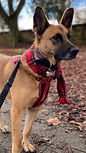Red Tartan Fleece Dog Scarf, Royal Stuart Fleece Scarf, Dog Neckerchief, Dog Scarves, Dog Bandanas, Uk, Handmade Designer Scarfs, All Dog Breeds