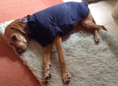 Fleece Dog Coats in a wide range of sizes and colour