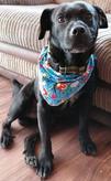 Dog Bandana, perhaps idea for a Dog Birthday Gift