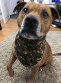 Caouflage Dog Bandanas for all Dog Breeds and all Sizes