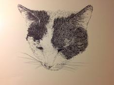Cat portrait. Pen and Ink