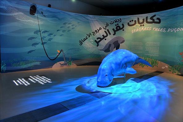 متحف قطر الوطني يفتتح أول معرض للتاريخ الطبيعي حول ثدييات بقر البحر في المياه القطرية