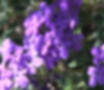 Capture d'écran 2019-07-09 à 16.33.48.pn