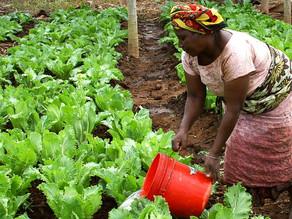アフリカにおける農業生産性向上の取り組み~BOPビジネス~