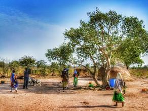 ガーナの土地所有・小規模農家の問題に挑戦する社会的企業