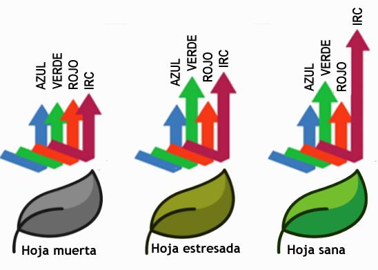 Fig.-3-Niveles-de-Infrarrojo-reflejado-p