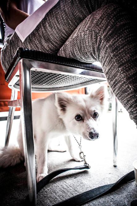 NYC Cafe Dog