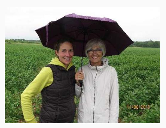Quinoa field in the rain