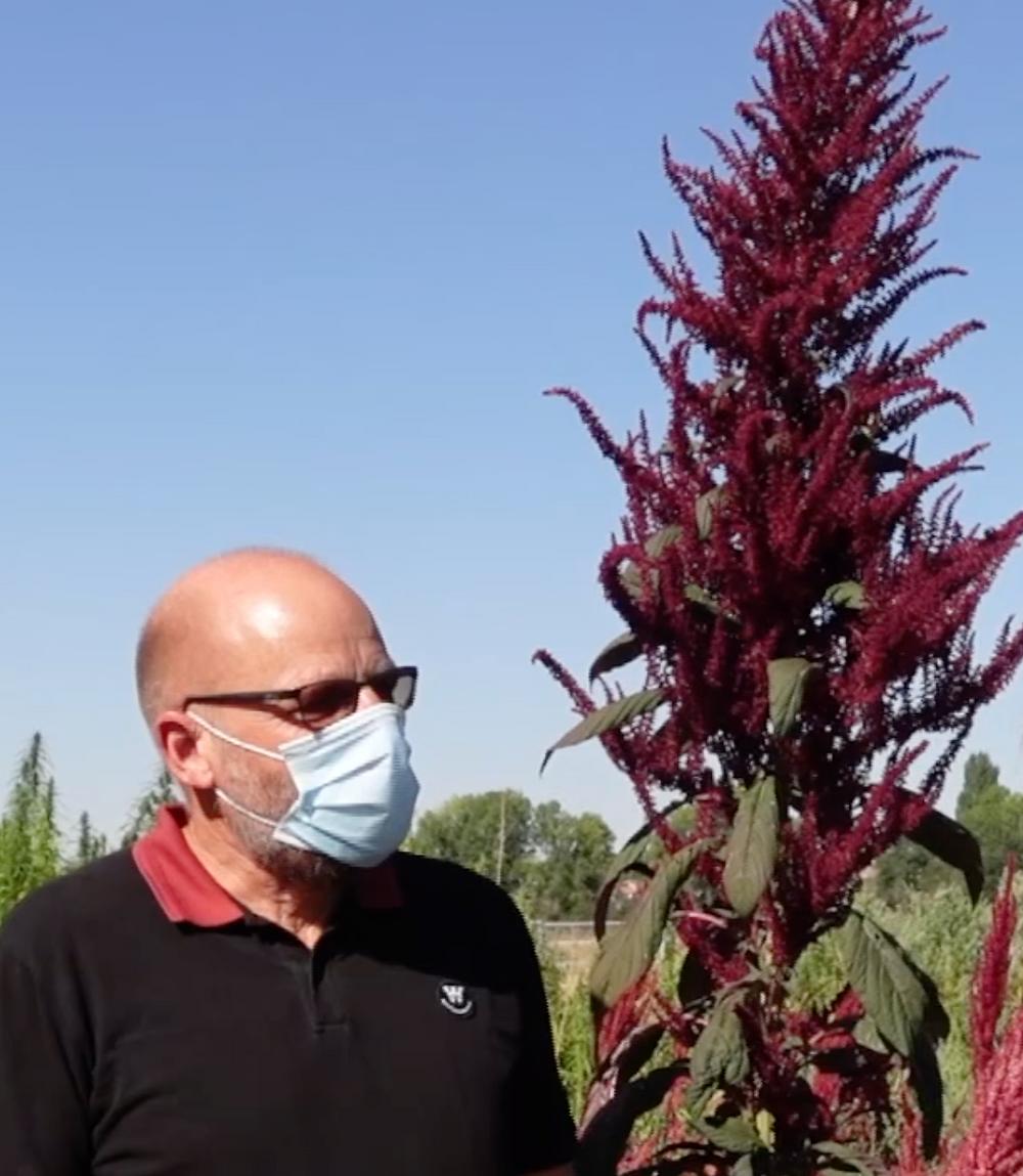 Sven-Erik Jacobsen in quinoa field