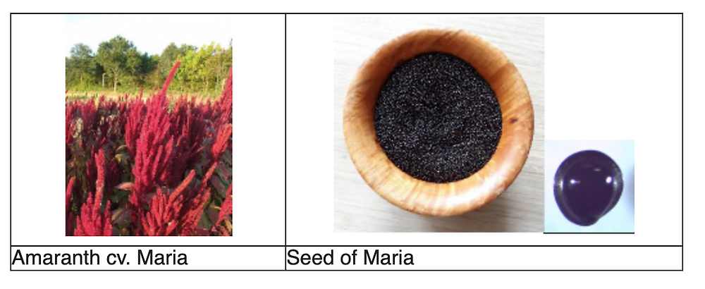 Amaranth fields and seeds