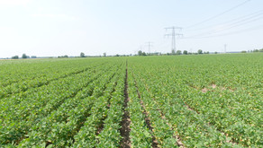 Quinoa Quality on field tour in Europe June 2021