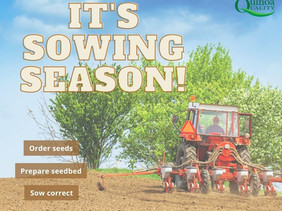 Get tips for sowing of quinoa and other crops from Sven-Erik Jacobsen
