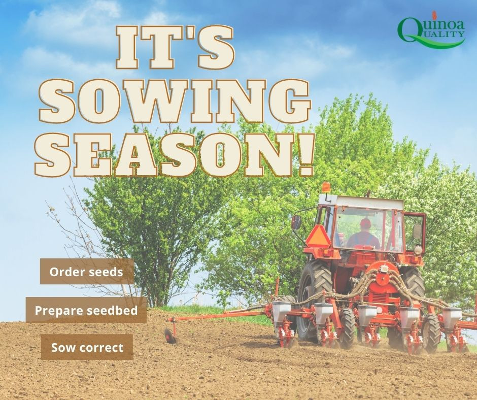 Quinoa - Sowing tips