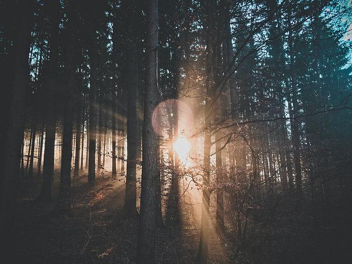 woodfiber_pine2_MQ.jpg