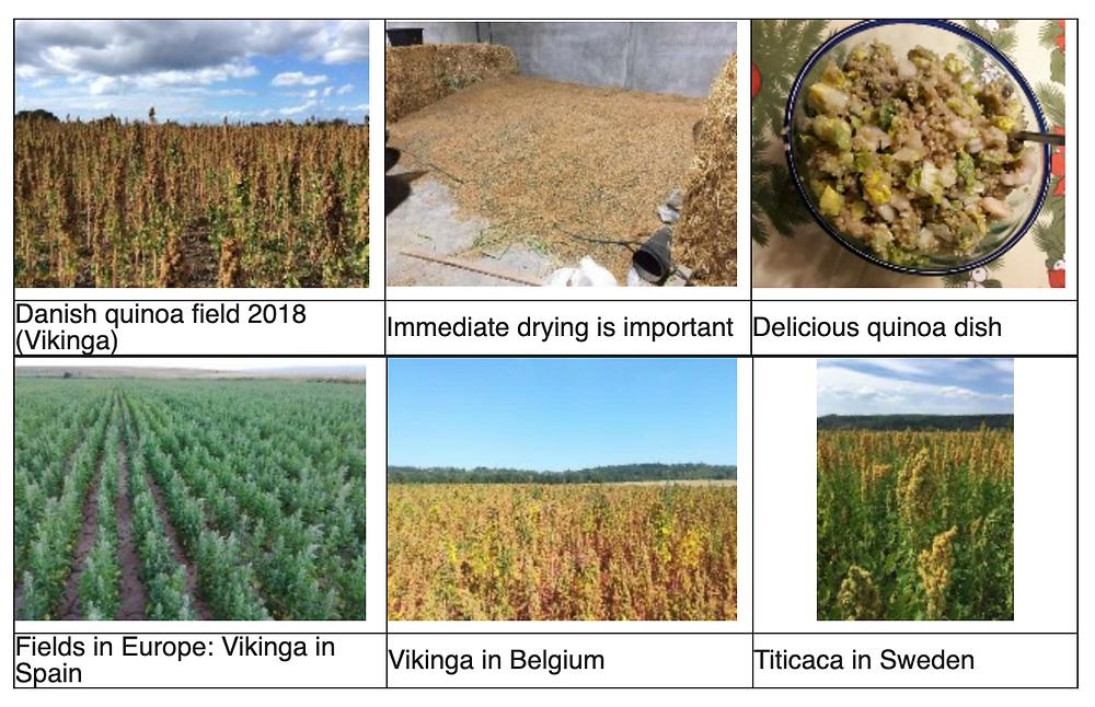 Quinoa fields and quinoa dish