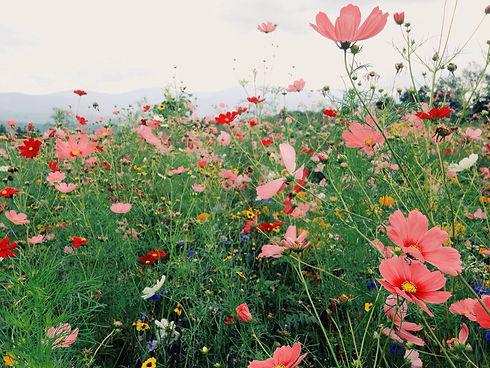 flowermix-quinoa-quality.jpg