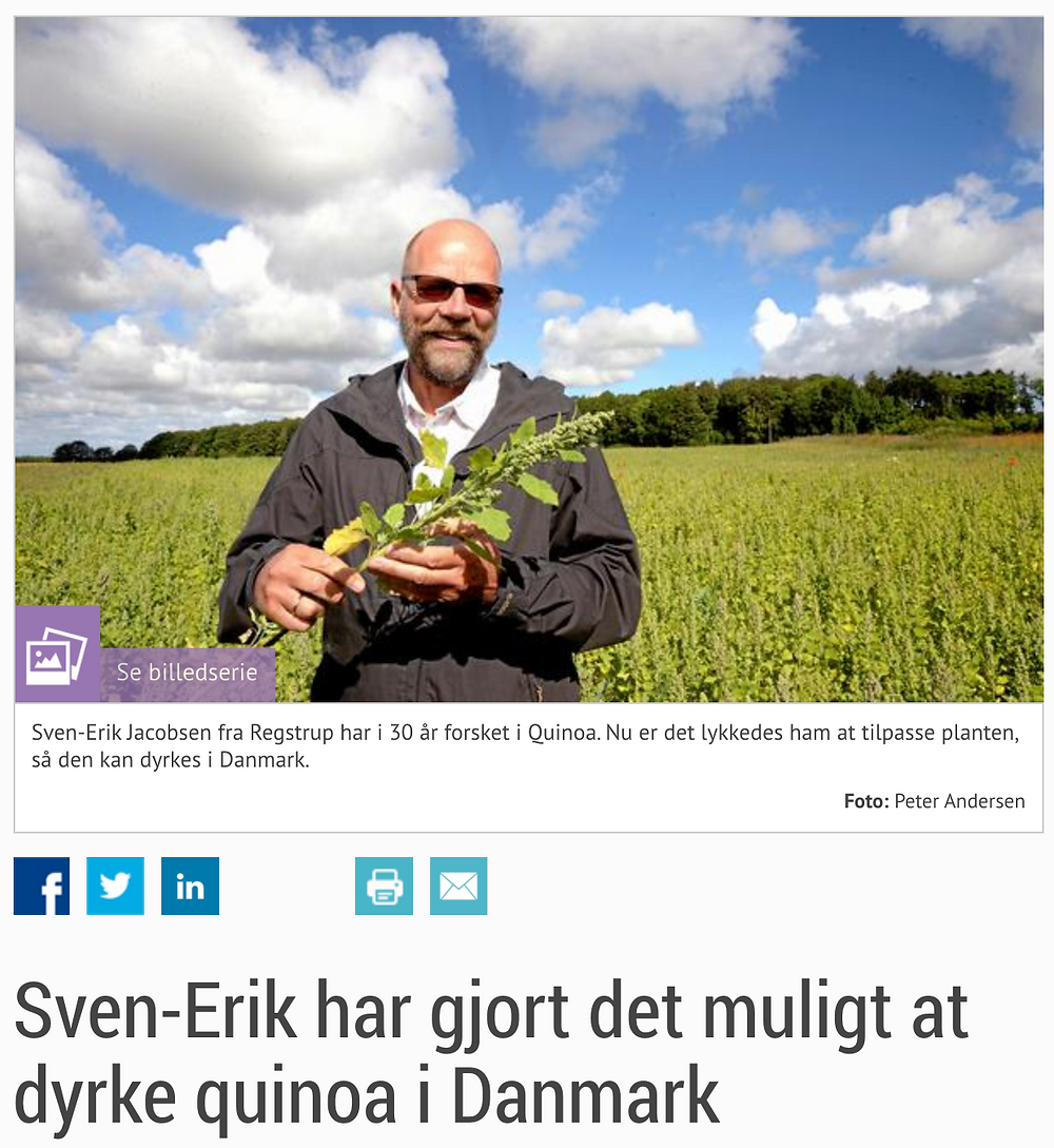 Sven-Erik Jacobsen with quinoa plant
