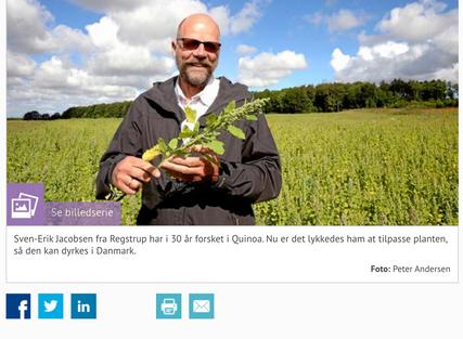 Quinoa in Denmark