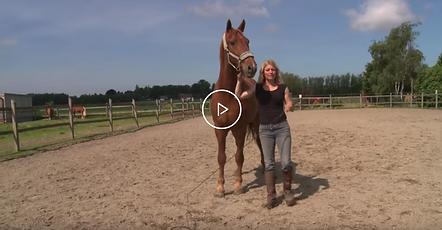 Frihed er kernen i When Horses Choose