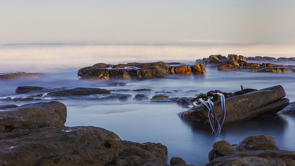 Kommetjie Kelp-7180.jpg