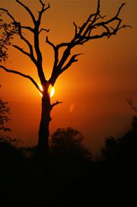 African sunset trees silhouette orange s
