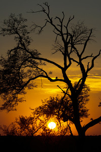 African sunset trees silhouette orange.w