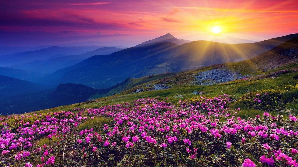 ontdek en zie de prachtige natuur, kleuren, zon in jezelf, de eerste stap naar herstel