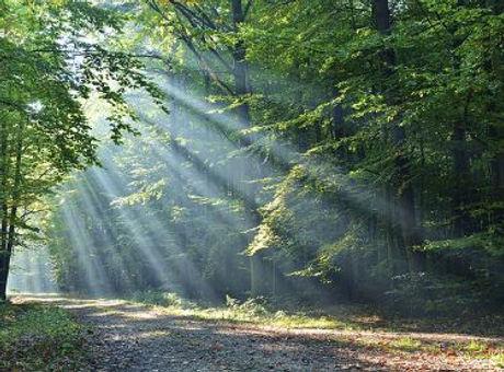 online cognitieve gedragstherapie door de bomen het bos leren zien
