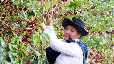 Taza de Excelencia Perú 2020 café