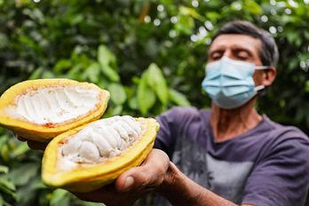 XIV Concurso Nacional de Cacao de Calidad